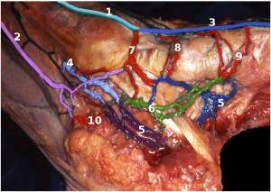 Perforating foot veins